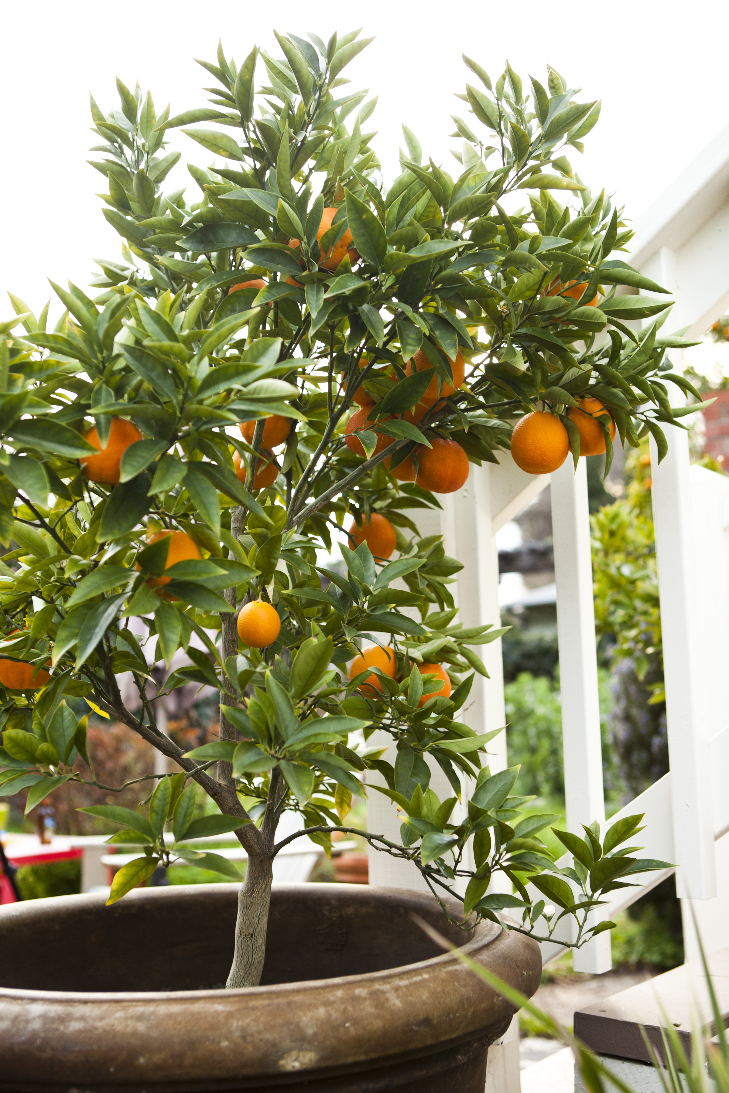 Fruit Trees In Small Spaces Stone Edge Farm Winery Blog